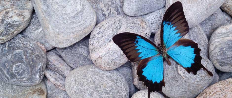 Forside-sommerfugl-940x400px2